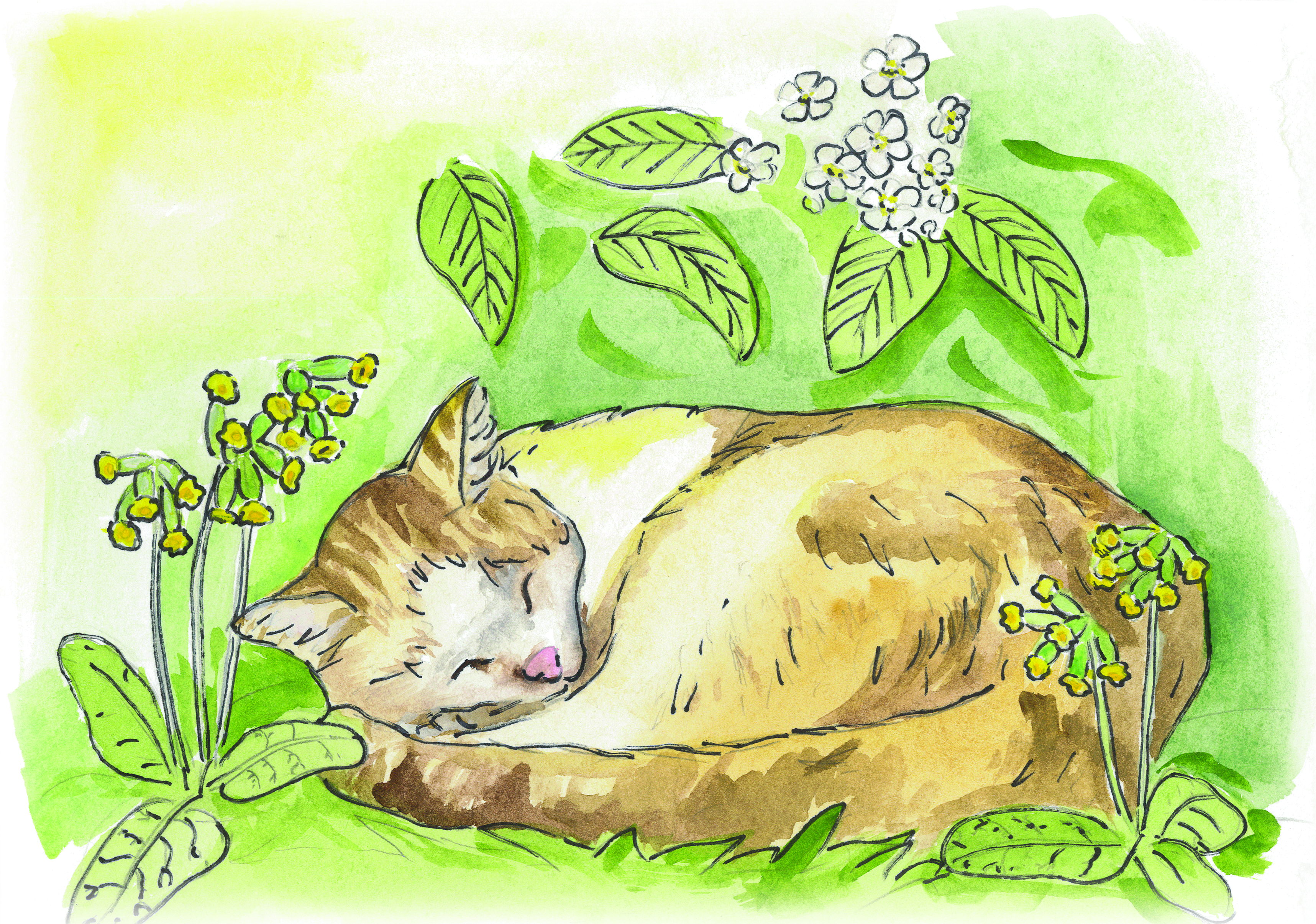 Pisine kass